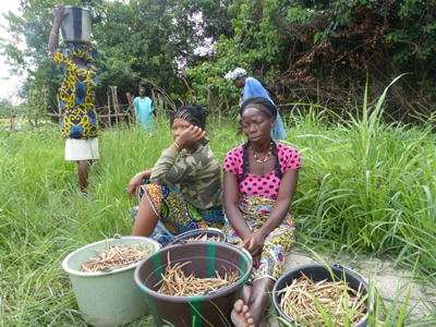 Members of a local women's group rest after harvesting cowpeas grown during the dry season.