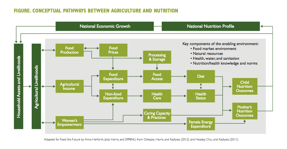 Figure. Conceptual Pathways Between Agriculture and Nutrition