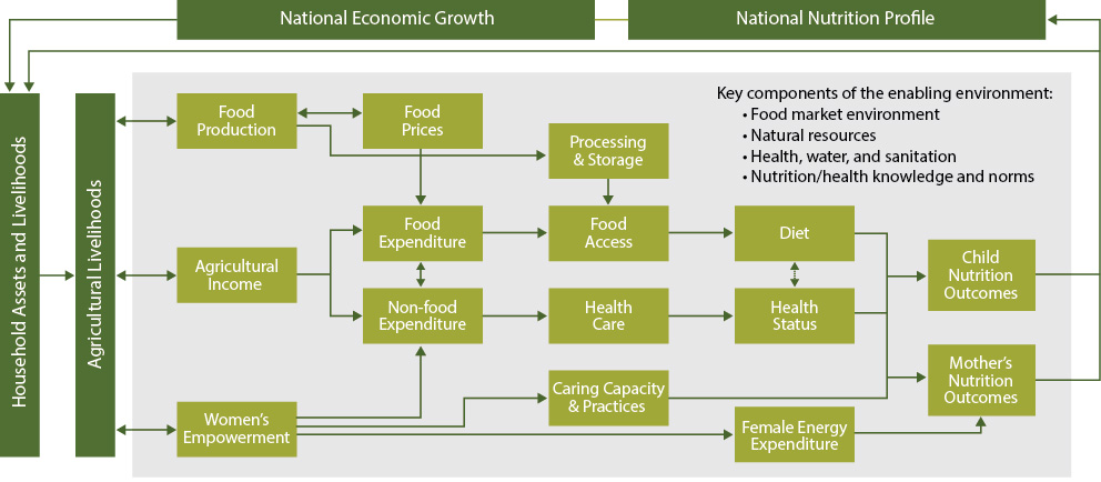 Flow chart for National Economic Growth, which has inputs into household Assets and Livelihoods which contribute to Agricultural Livelihoods which are components of Food production, agricultural income and women's empowerment. Food production influences food prices and processing and storage. Agricultural income influences food expenditure, food access, diet and child and mother's nutrition outcomes which feeds into the national nutritional profile. Agricultural income also influences non-food expenditure, health care and health status which also affects child and mother's nutrition outcomes which feeds into the national nutritional profile. Women's empowerment affects caring capacity & practices, female endergy expenditure and mother's nutrition outcomes. Key components of the enabling environment are: food market environment; natural resources; health, water, and sanitation; nutrition/health knowledge and norms.