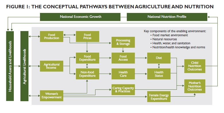 Figure 1: The Conceptual Pathways Between Agriculture and Nutrition