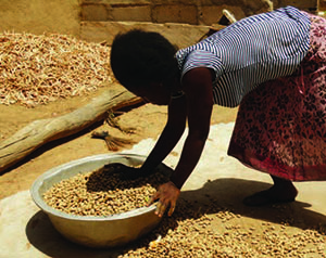 Photo of a woman sorting a large bowl of ground nuts.