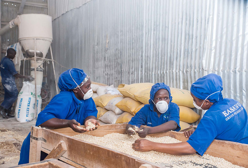 Millers removing debris from the maize grain at a small-scale milling plant.
