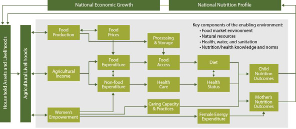 Figure 13. Conceptual Pathways between Agriculture and Nutrition