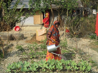 Photo of a woman watering plants with a metal watering pitcher.