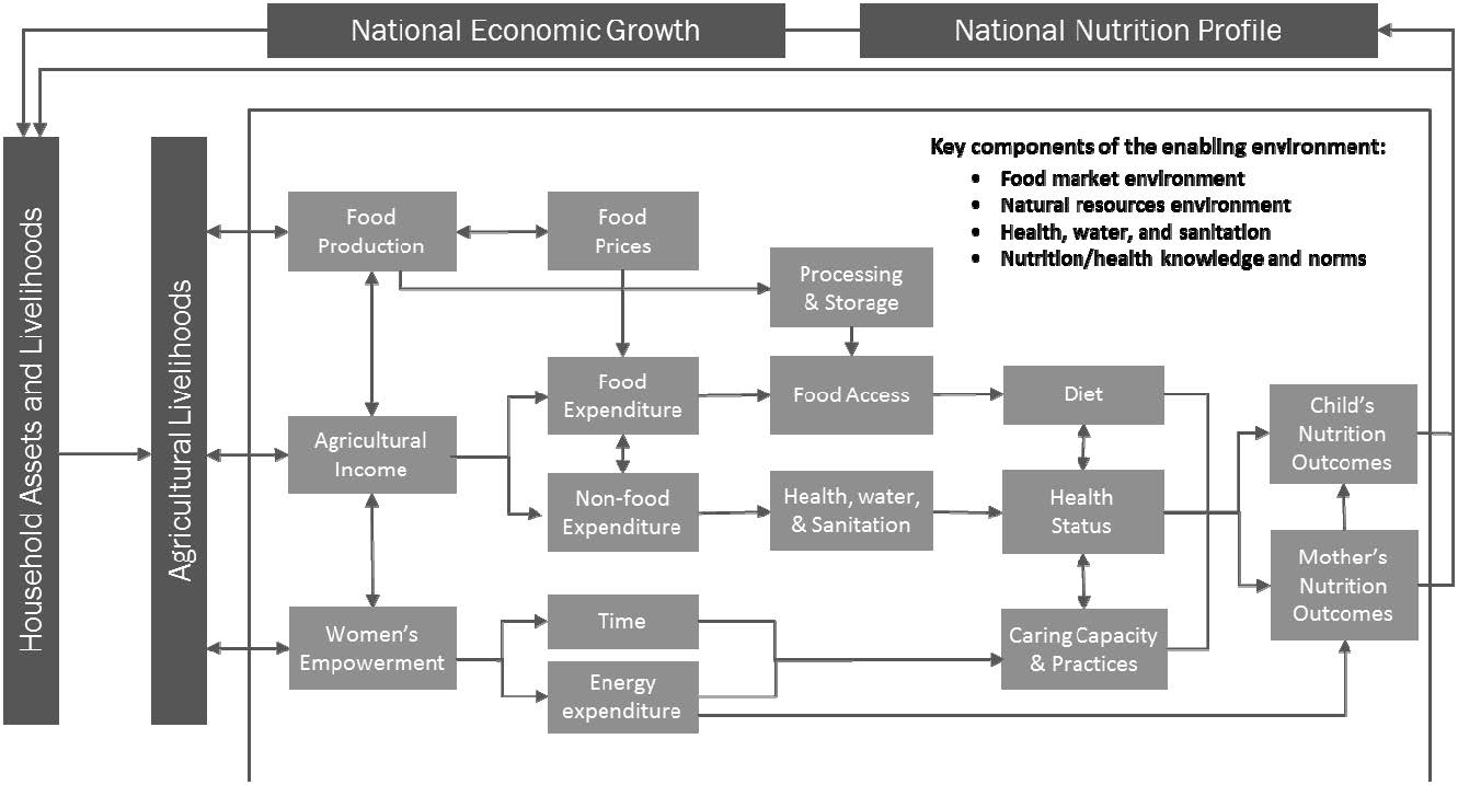 "Figure 1. Agriculture-Nutrition Pathways. ""In 2014, SPRING developed a conceptual framework, which was adapted from earlier work by Kadiyala et al. (2014), and that identifies three primary pathways linking agriculture and nutrition (see Figure 1): · Food production to make diverse and nutrient-rich foods available for consumption · Income to purchase nutritious foods and pay for health care services, as well as improved water, sanitation, and hygiene (WASH) products and services · Women's empowerment, incl"
