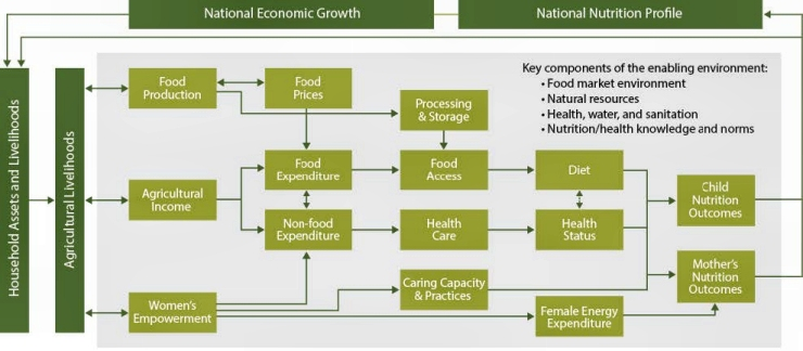 Figure 3. SPRING's Conceptual Pathways between Nutrition and Agriculture