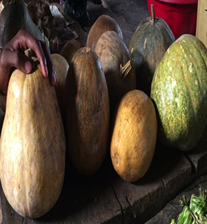 Photo of a table of gourds of different shapes and sizes.
