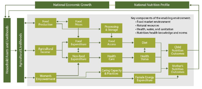 Figure 9. Conceptual Pathways between Agriculture and Nutrition