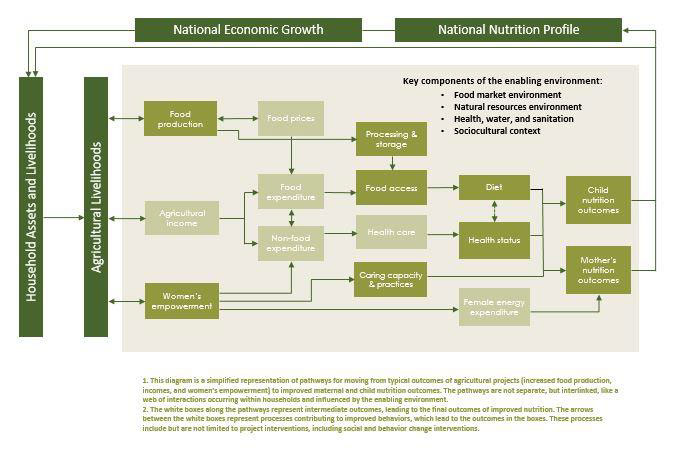 A chart shows how the National nutrition profile and the national economic growth feed into household assets and livelihoods, which feeds in to agricultural livelihoods. The following elements all feed into each other. Food production, food prices, processing and storage. Agricultural income, food expenditure, non-food expenditure, food access. Food access affects diet, health status and child nutrition outcomes. Non-food expenditure affects health care and health status. Women's empowerment affects caring capacity & practices, female energy expenditure, and mother's nutrition outcomes. All of which feeds back into the national nutrition profile and national economic growth. Key components of the enabling environment are: food market environment; natural resources environment; health, water and sanitation; and sociocultural context.<br /> 1. This diagram is a simplified representation of pathways for moving from typical outcomes of agricultural projects (increased food production, incomes, and women's empowerment) to improved maternal and child nurition outcomes. The pathwasys are not separate, but interlinked, like a web of interactions occurring within households and influenced by the enabling environment.<br /> 2. The white boxes along the pathways represent intermediate outcomes, leading to the final outcomes of improved nutrition. The arrows etween the white boxes rpresent processes contributing to improved behaviours, which lead to the outcomes in the boxes. These processes include but are not limited to project interventions, including social and behavior change interventions.