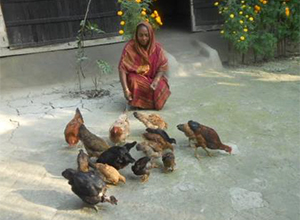 Photo of a woman feeding chickens