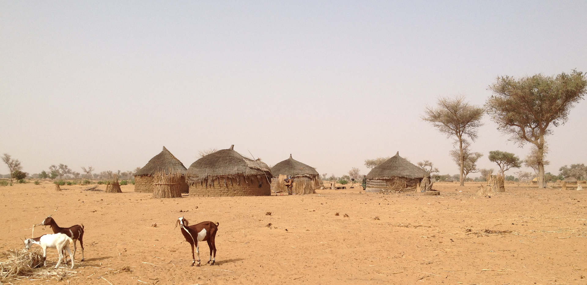 Photo of goats with a village in the background