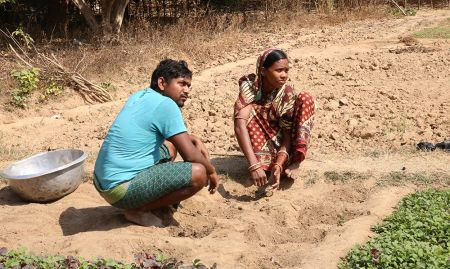 The couple demonstrates how to maintain proper spacing so that the plant will get enough food from the soil, get sufficient sunlight, and good air flow, which can protect the plants from pest and disease attack. Photo credit: Peggy Koniz-Booher, 2017