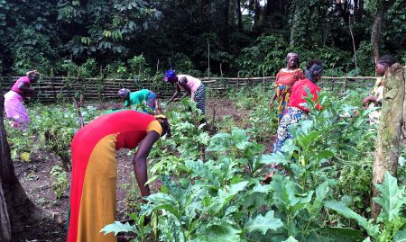 NGO-supported community gardens, like this one, can serve as a potential source of nutrient-rich food.