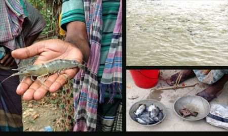 Both fish and shrimp were NRVCCs of study in Bangladesh, whereas in Cambodia only fish were studied.