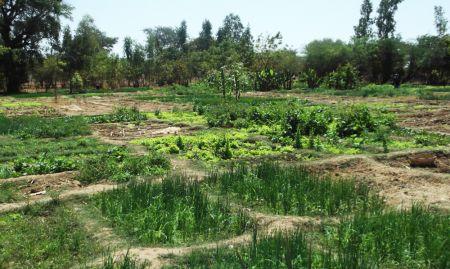 SPRING identified this existing garden in Segué, Bankass for the commune-level garden.