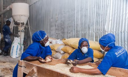 Millers removing debris from the maize grain at a milling plant. SPRING carried out a survey to identify the number of maize millers in the country and the number of those who fortify. It was found that majority of the small and medium scale millers do not fortify their maize flour. But since the average Ugandan most likely consumes flour from such a small-scale miller, there is need to enable these millers to fortify.