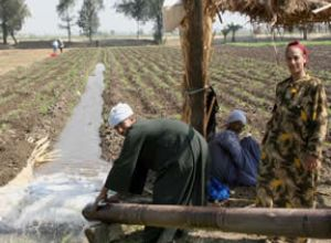 Man and woman irrigating field