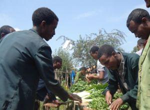 Men chopping vegetables