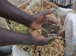 Photo Credit: Dr. Sally Abbott, USAID Bureau for Food Security