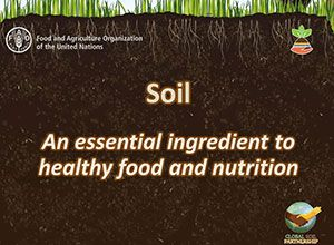 Soil An essential ingredient to healthy food and nutrition