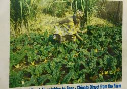 An advertisement by the vegetable shelves of SPAR -- a supermarket -- in Zambia shows local farmers who supply the fresh produce available in this market.