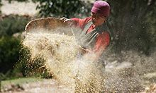 A woman harvests buckwheat in Geling, Nepal.