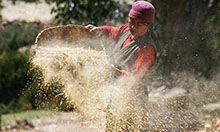 A woman harvests buckwheat in Geling, Nepal.
