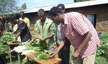 Engaging Extension and Advisory Service Providers in Nutrition-Sensitive Agriculture