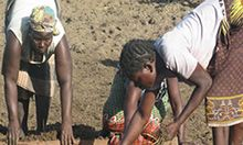 Two women harvesting groundnuts in Ghana.