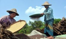Women threshing rice.