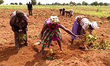 Photo of three women working in a field.