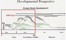 Slide depicting developmental perspective.