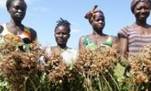Female farmers with their ground nut crops.