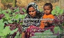 A woman crouches in her vegetable garden and holds her toddler son. She is focused on the plants while he is focused on the camera. The text overlay says: What is nutrition-sensitive agriculture? Agriculture is nutrition-sensitive when it goes beyond food production to address underlying causes of malnutrition.