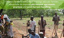 World Food Day 2016 Facts - Farmer Field Schools