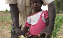Sambo's 4-year old daughter collects nutritious beans