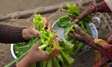 Close up image of people's hands preparing greens.