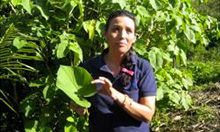 Photo of a boy holding a large leaf, ACCESO nutrition education