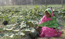 Mothers Becoming Homestead Farmers in Bangladesh