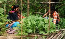 Mehdi Hasan Sattar helps his wife in the homestead garden, where the family grows nutritious vegetables. Photo credit: SPRING/Bangladesh