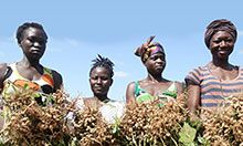 Four women pose holding bunches of groundnut plants.