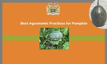 """Page 1 [figure] Coat of arms for Sierra Leone [photos, in center and in upper right] Two different kinds of pumpkin [title] Best Agronomic Practices for Pumpkin [logos] USAID logo: """"USAID: United States Agency [for] International Development. USAID. From the American People"""" SPRING logo: """"SPRING. Strengthening Partnerships, Results, and Innovations in Nutrition Globally"""""""