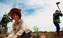 Woman and man in field. Credit: Cambodia HARVEST
