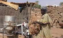 Photo of a woman carrying a bushel of hay across a yard with a stone wall in the background.