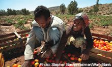 Two people sort tomatoes - source: Stephan Bachenheimer/World Bank