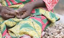 A woman's hands and legs as she sits and shells groundnuts. There is a pile of groundnuts next to her.