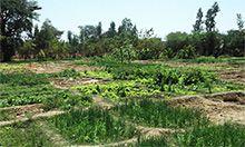 Mali countryside