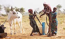 Photo of three women smiling as they work a pump to fill a tub with water, a white bull stands to the left.