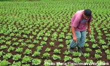 Man in the field - source: Maria Fleischmann/World Bank