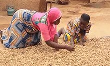 A woman and boy kneel over a tarp spread with groundnuts and pick the bad nuts from the good.